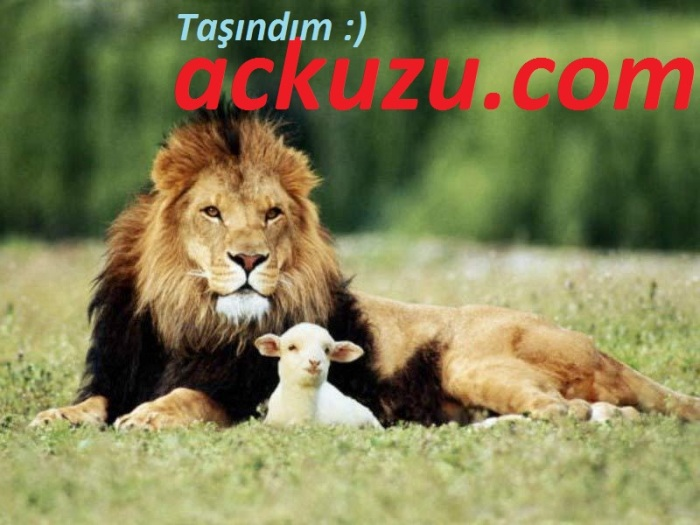 ackuzu.com